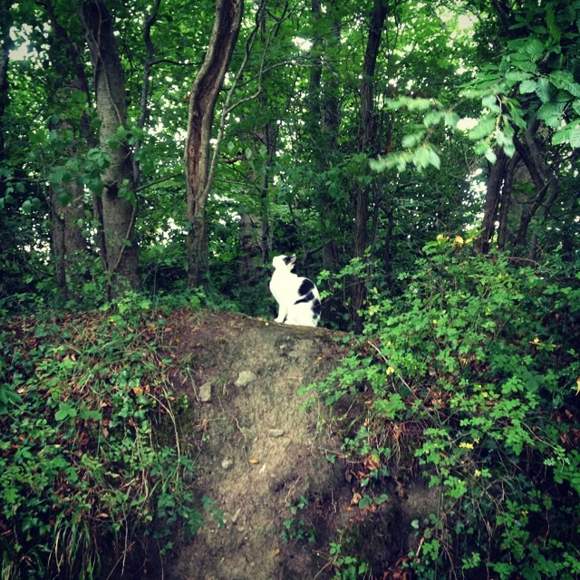 Cat in the Woods.  #miaaow #cat